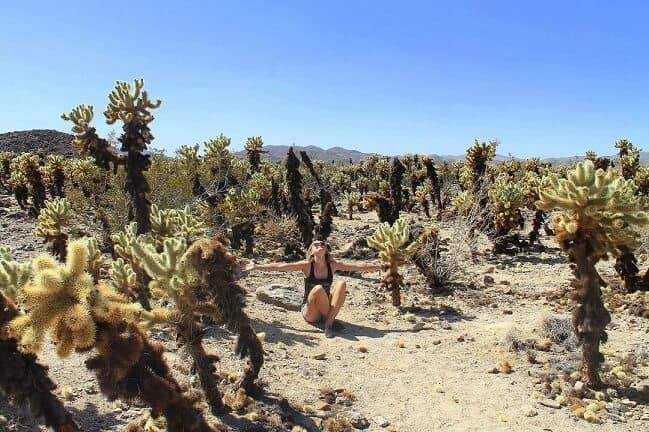 Cholla Cacti in Joshua Tree National Park