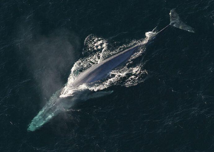 Largest Sea Creature