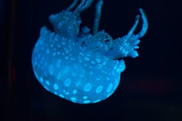 jellyfish in blue lighting floating upside down