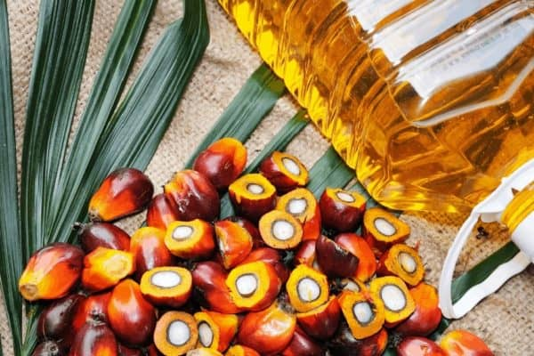 Palm Oil Lead