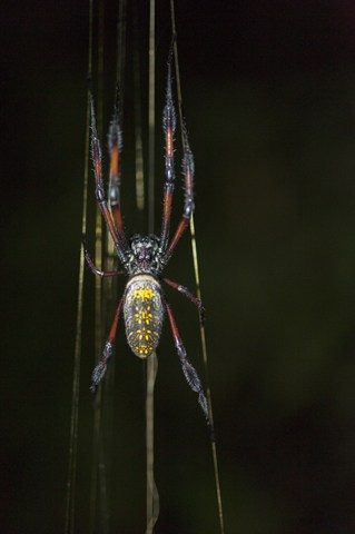 Madagascar Animals: Spider