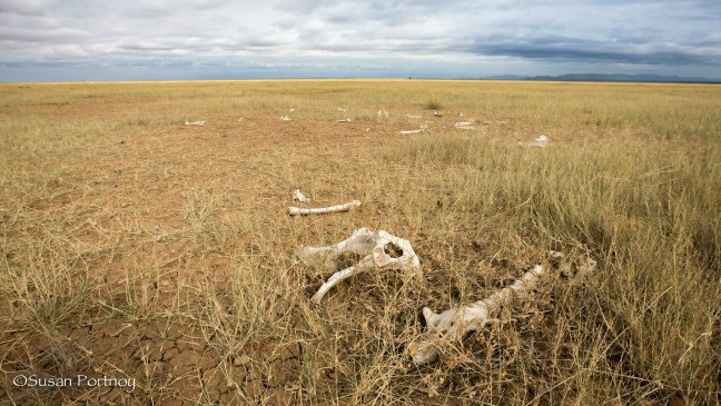 Scattered Animal Bones