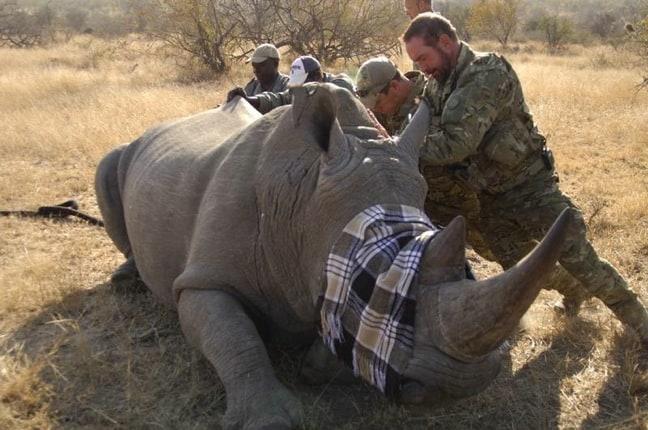 Rhino Wars: The Battle to Stop Rhino Poaching in South Africa