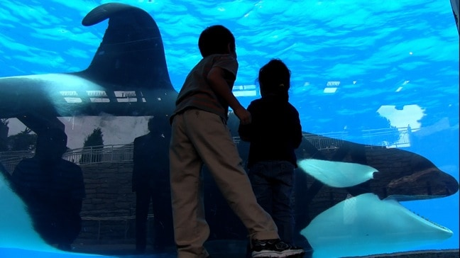 Children at Sea World Try to Engage Tilikum
