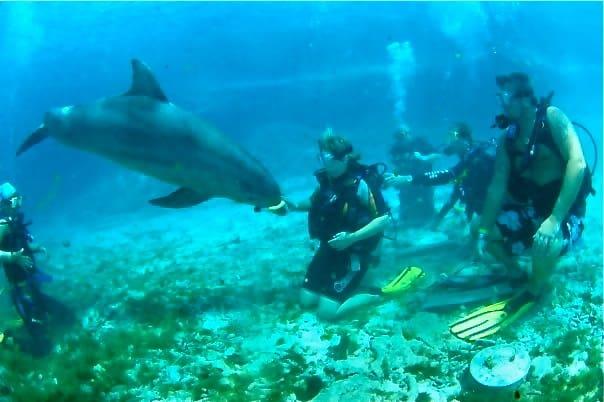 training-dolphins-dolphin-academy-curacao
