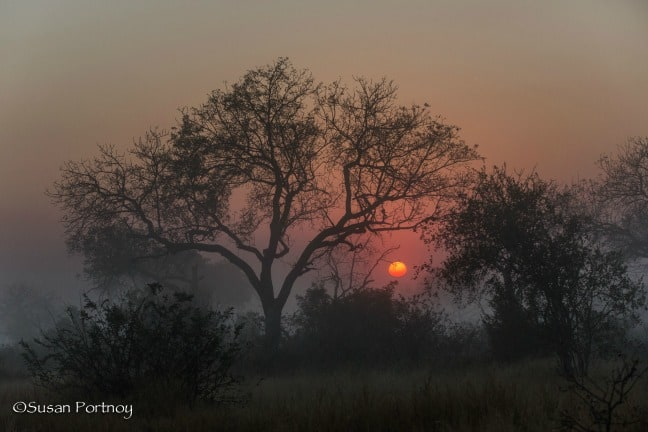 Eerie morning in Timbavati Game Reserve