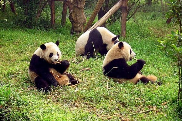 Top 7 Things to Do in China for Nature Lovers