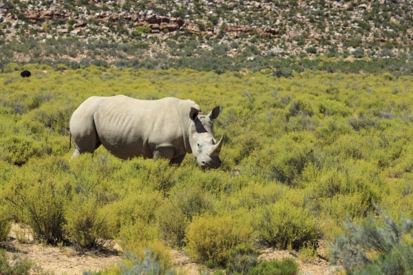 #JustOneRhino Campaign seeks to Save Rhinos in South Africa