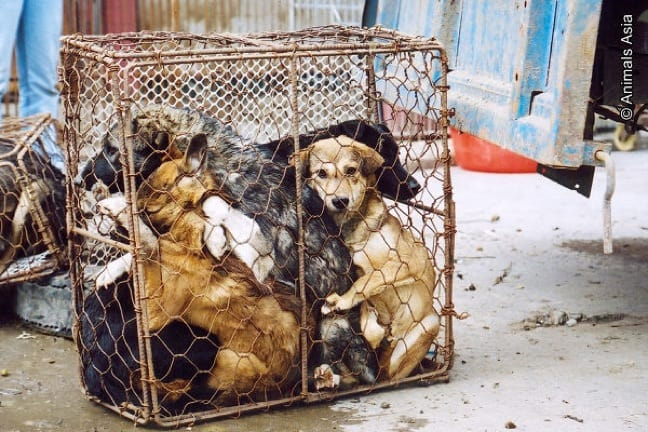 Dogs Being Sent For Sale at a Chinese Market