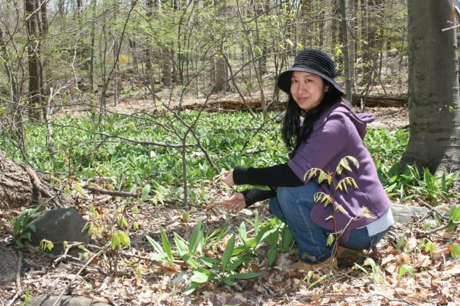 Ava Chin on Urban Foraging