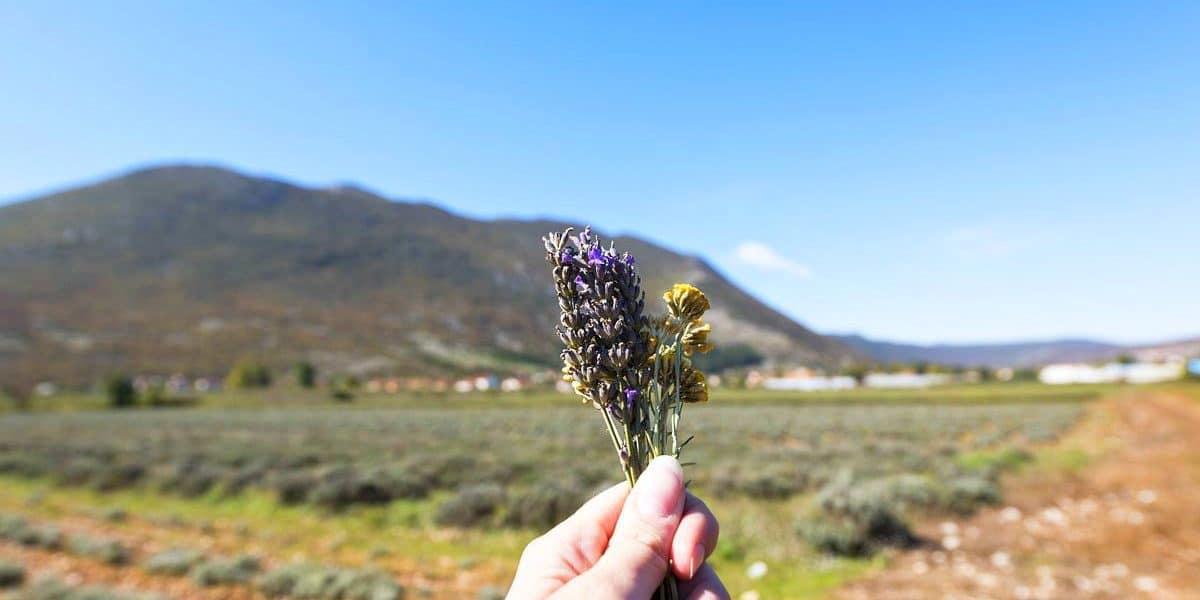 Balkan Travel-Via Dinarica herzegovina-wild-herbs