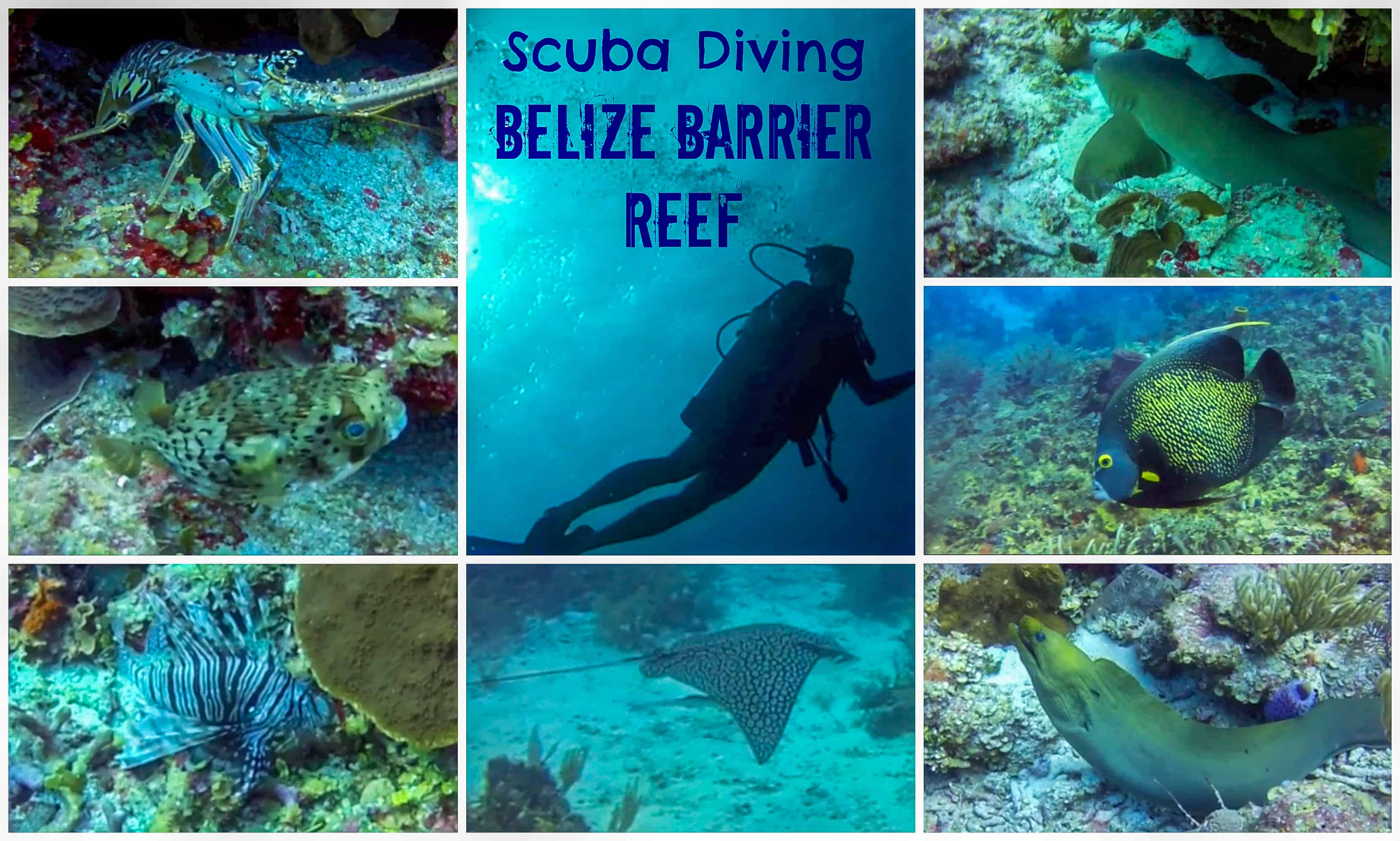 Scuba Diving Belize Barrier Reef