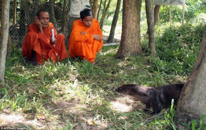 Buddhist monks blessing Dara, the hairy-nosed otter