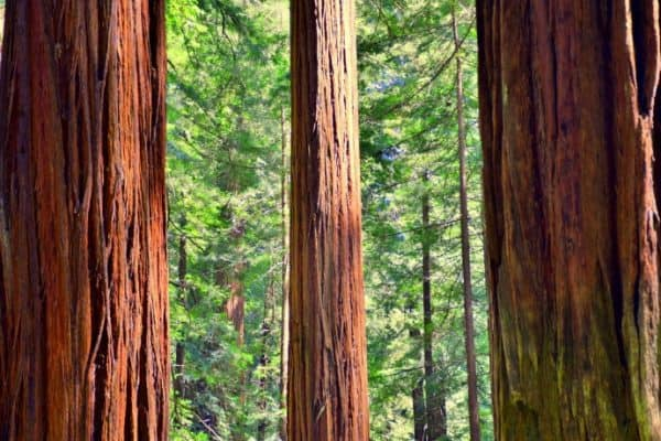 Avenue of the Giants: Scenic Drive Through California's Redwood Trees