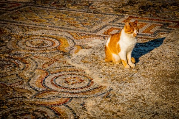 PIC OF THE DAY: The Mysterious Cats of Ephesus, Turkey