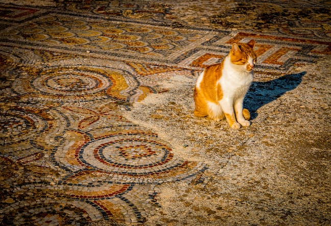 Cats_of_Ephesus_Turkey