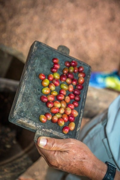 Coffee Beans photo by Bret Love