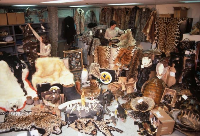 Confiscated Wildlife Products at JFK Airport in New York