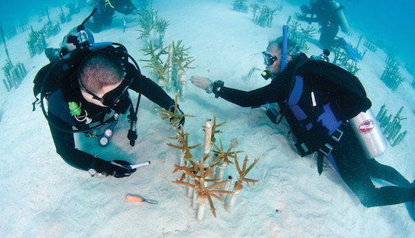 INTERVIEW: Coral Restoration Foundation Celebrates World Oceans Day