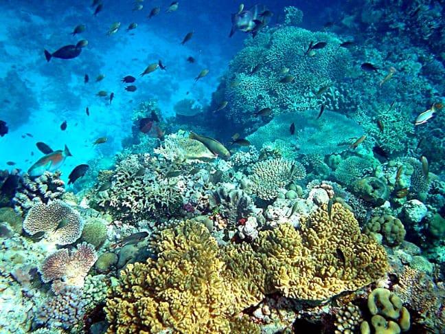Coral_reefs_in_papua_new_guinea_Mila Zinkova_via_CC