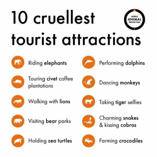 Cruel Animal practices