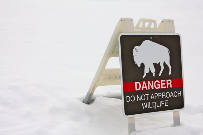 Responsible Travel: Do Not Approach Wildlife Sign
