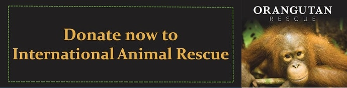 Donate to International Animal Rescue