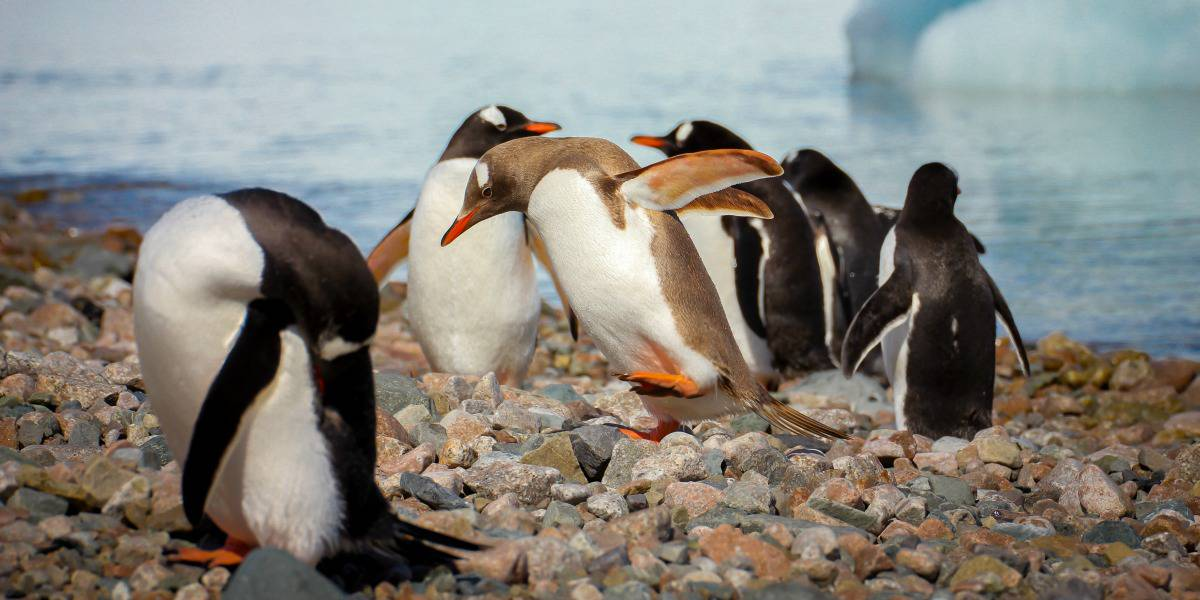 Ecotourism Destination - Antarctica