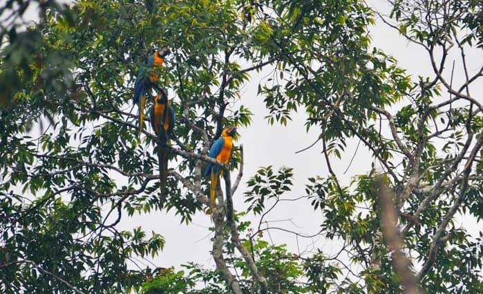 Ecuadorian Amazon Rain Forest Macaques