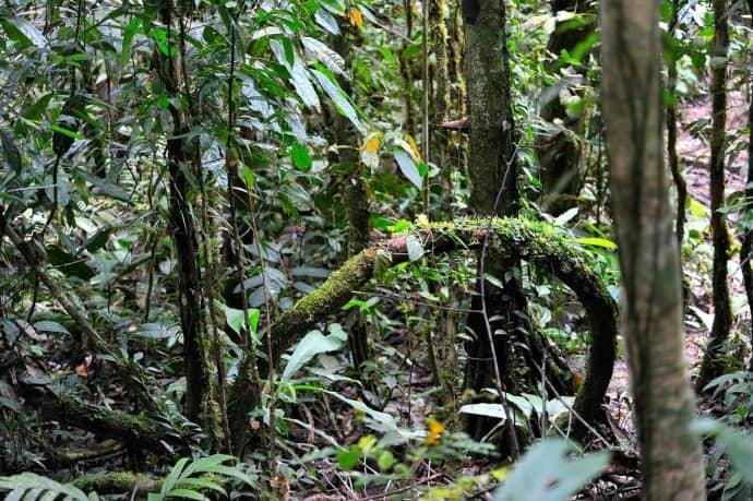 Ecuadorian Amazon Rain Forest