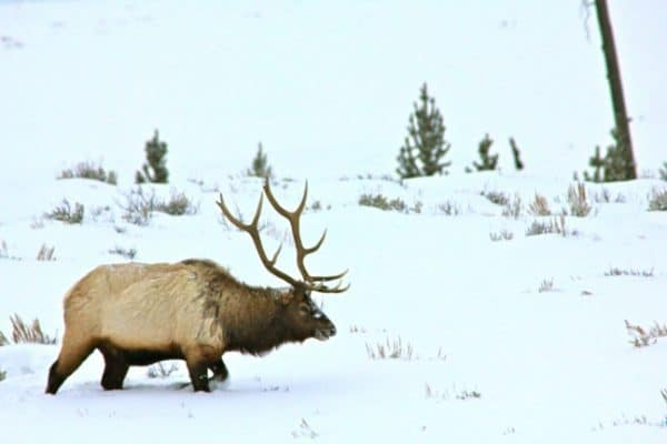 Yellowstone National Park Lamar Valley Photo Gallery