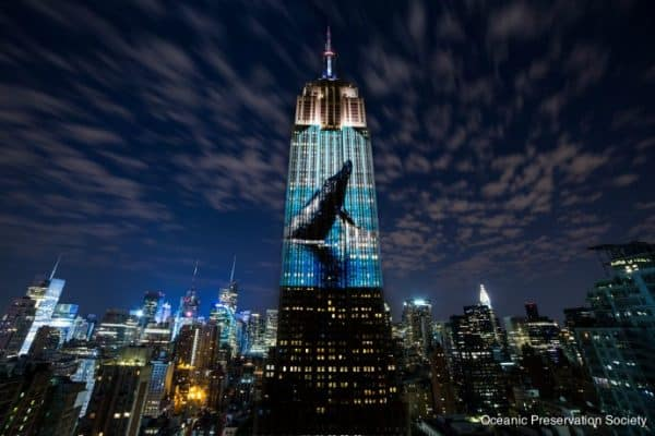 INTERVIEW: The Cove Director Louie Psihoyos on Racing Extinction