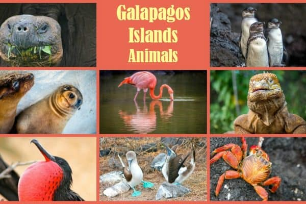 Galapagos Islands Animals Photo Gallery