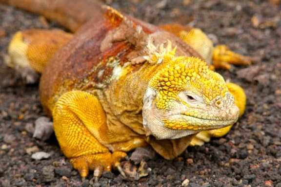 GALAPAGOS ISLANDS Day 4- Photo Gallery