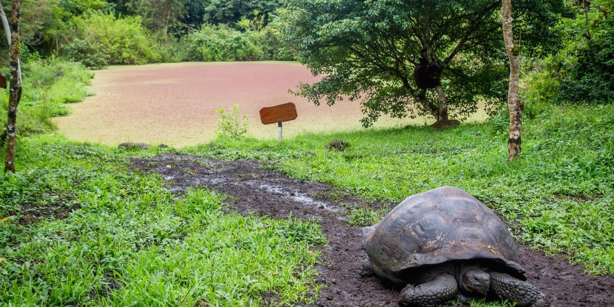 Galapagos Islands Animals: Galapagos Tortoise