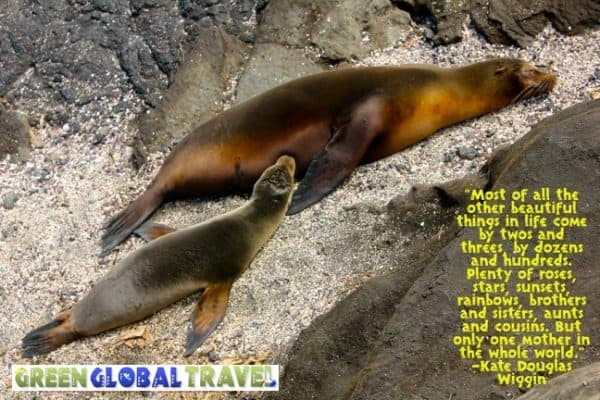 PIC OF THE DAY: Galapagos Sea Lion Pup & Mother