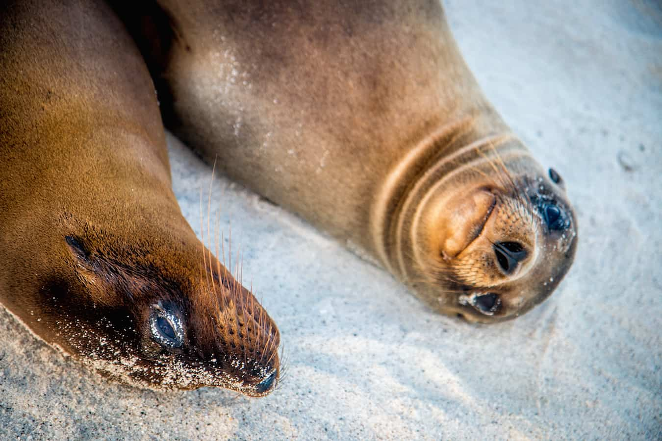 Galapagos Sea Lion Pups on Española Island