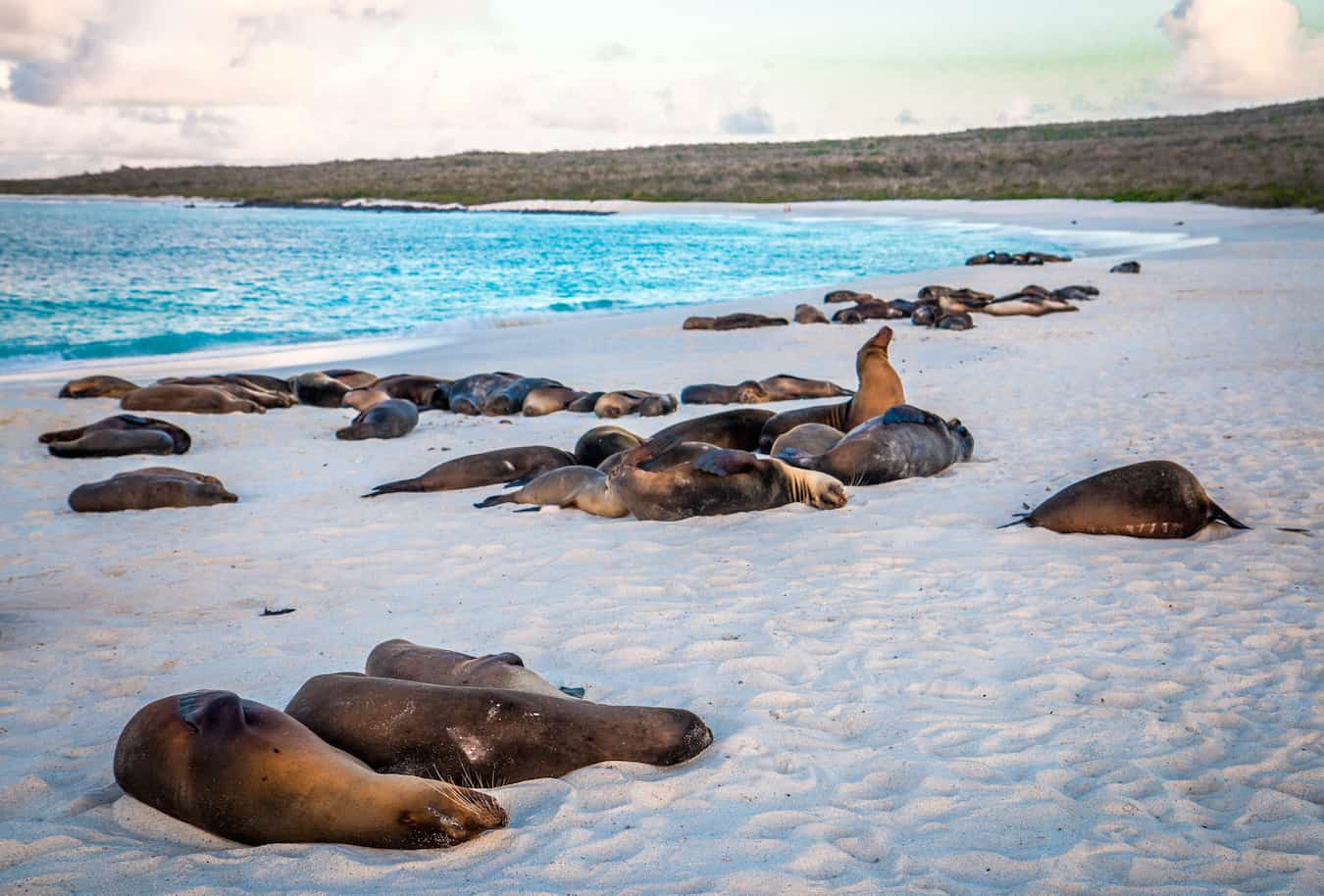 Benefits of Ecotourism- Galapagos Islands