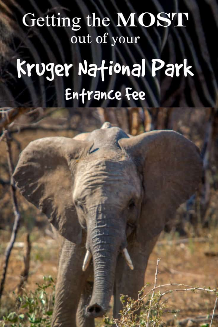 Getting the Most out of your Kruger National Park Entrance Fee