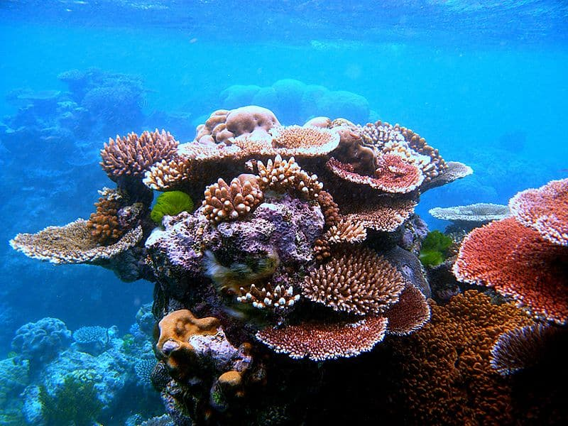 Great Barrier Reef by Toby Hudson, via Creative Commons