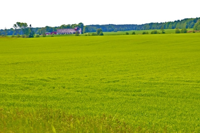 Green Pasture in Falkoping, West Sweden