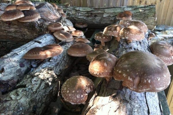 GO GREEN TIP #86: Mushroom Growing Guide