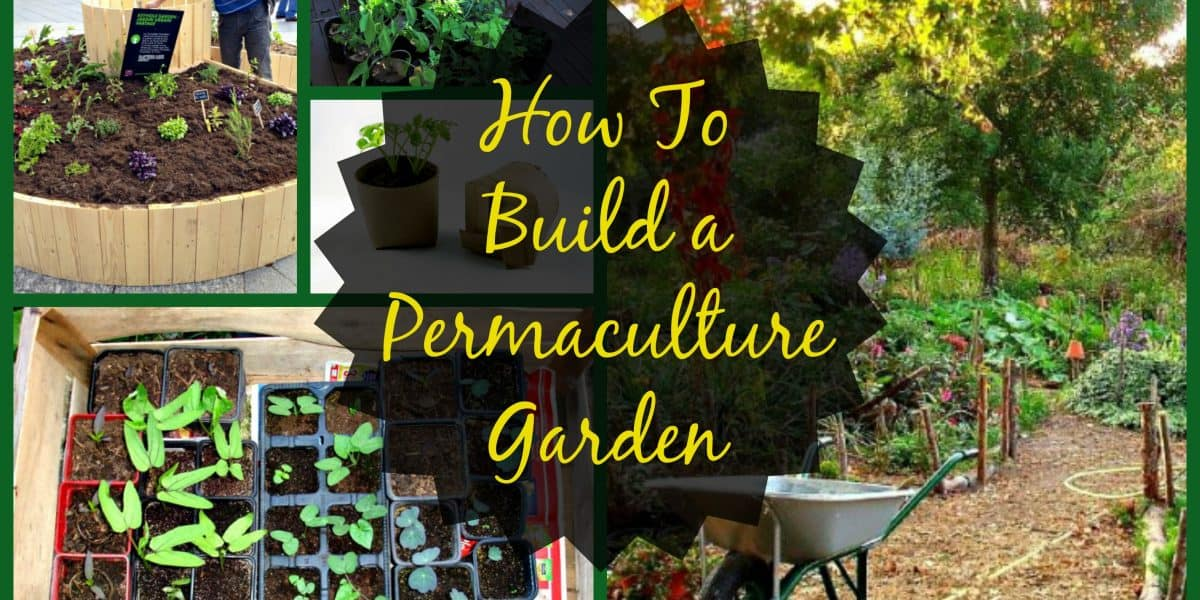 How to Build a Permaculture Garden