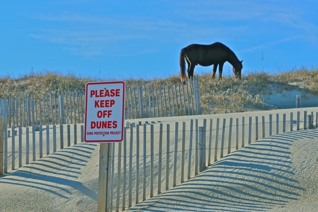 The Outer Banks Wild Horses Controversy