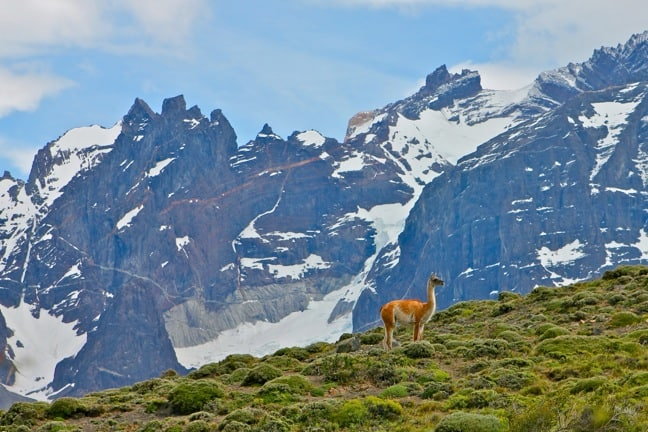 Best Hiking Trails - Torres Del Paine National Park, Chile and Guanaco