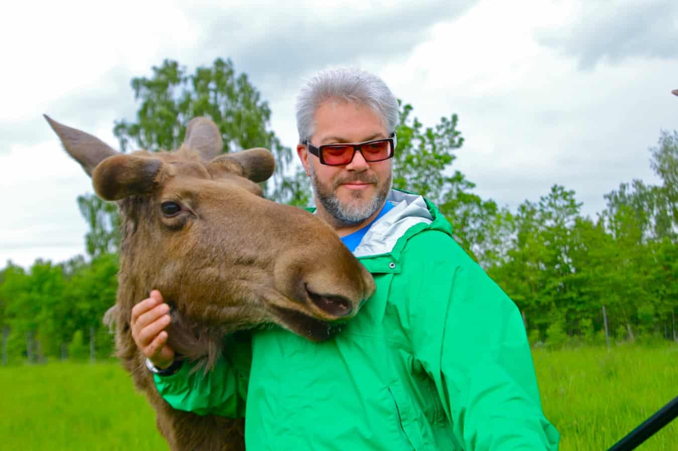 Oskar, the Coolest Moose in Sweden, at Falkoping's Wragarden Farm