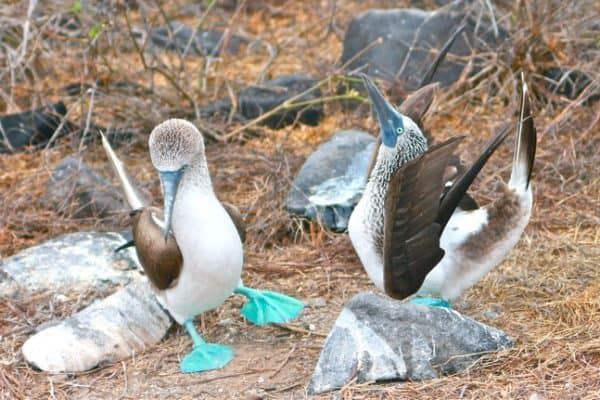 Darwin's Paradise: Galapagos Islands Animals, Ecotourism & Adventure