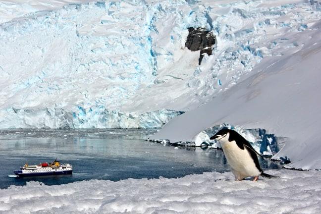Chinstrap Penguin Above Orne Harbour, Antarctica