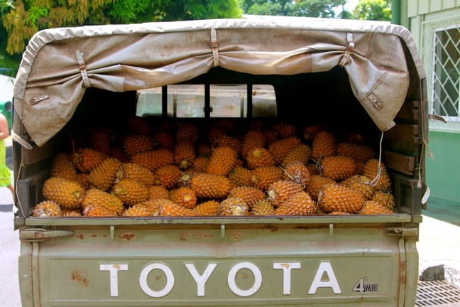 Pineapple Truck at Manutea Tahiti