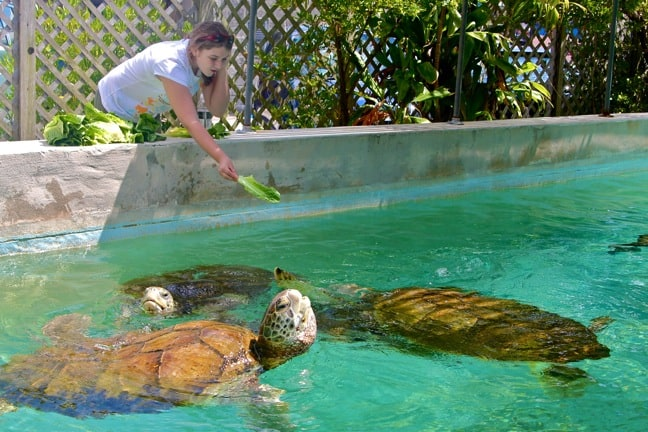 Alex Love Feeding Sea Turtles at the Bermuda Aquarium